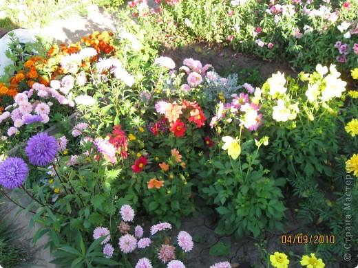 Уже так хочется на дачу! Смотрела на свои цветы 2010года, решила вам показать. Пионы. фото 11