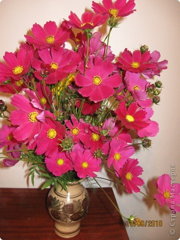 Уже так хочется на дачу! Смотрела на свои цветы 2010года, решила вам показать. Пионы. фото 20