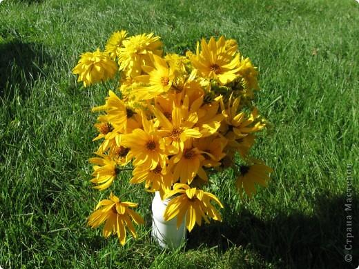 Уже так хочется на дачу! Смотрела на свои цветы 2010года, решила вам показать. Пионы. фото 21