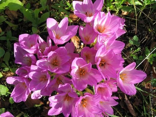 Уже так хочется на дачу! Смотрела на свои цветы 2010года, решила вам показать. Пионы. фото 18