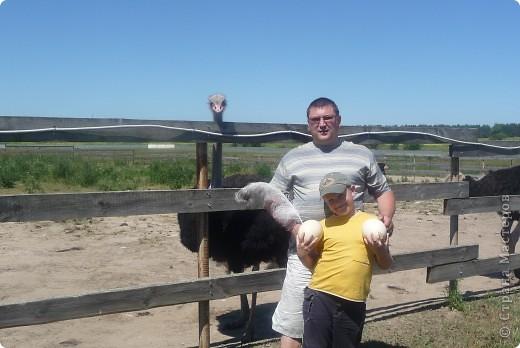 Летом я с родителями ездил на страусиную ферму. Очень понравилось! фото 5
