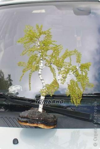 Осенняя берёзка. фото 1