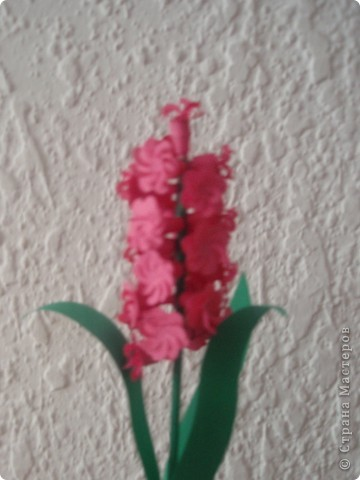 бабочка колибри фото 3