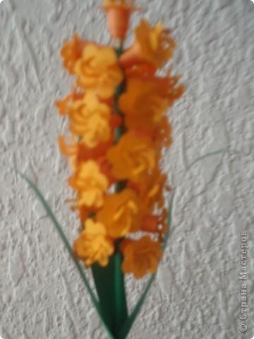бабочка колибри фото 4