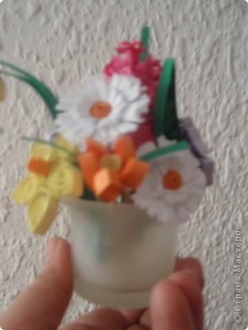 бабочка колибри фото 2