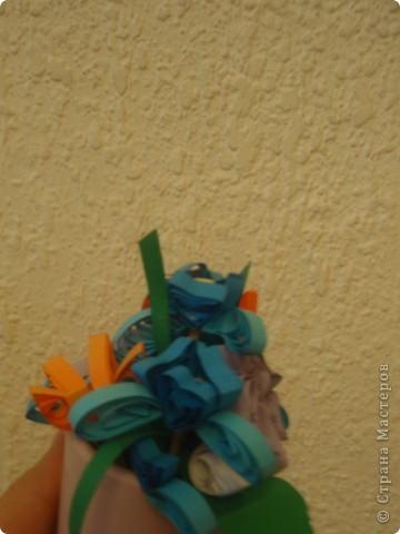 бабочка колибри фото 5