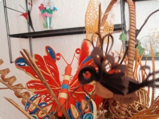 бабочка колибри фото 1