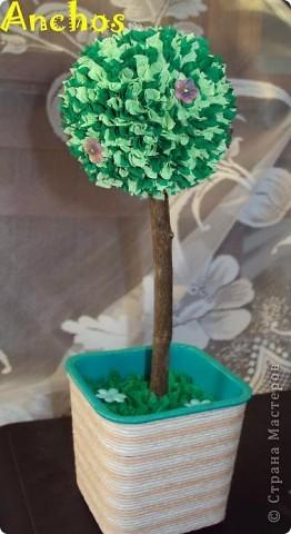 Вот и у меня выросло деревце! фото 1