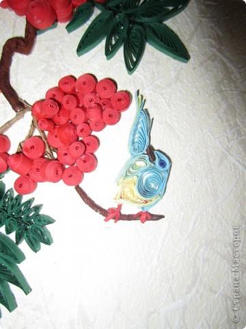 Завтра первый день весны, а у меня осень-рябинка поспела, птицы животики набивают перед зимой. фото 5