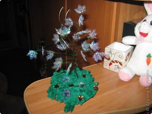 Очень долго собиралась сделать такую красоту и вот наконец оно выросло мое кленовое деревце.Жаль что фотка не передает цвет листиков. Они обалденно переливаются от красного до зеленого цвета. фото 1