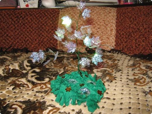 Очень долго собиралась сделать такую красоту и вот наконец оно выросло мое кленовое деревце.Жаль что фотка не передает цвет листиков. Они обалденно переливаются от красного до зеленого цвета. фото 2