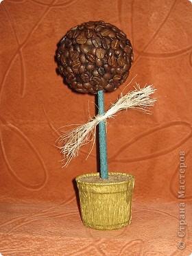 Кофейное дерево. Первый опыт.