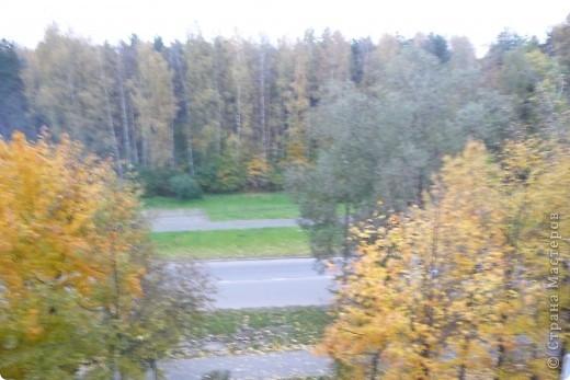 Красотища из моего окна... фото 5