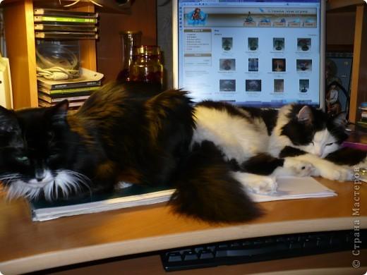 Поздравляем всех кошек и их хозяев, и призываем отметить этот праздник. фото 3
