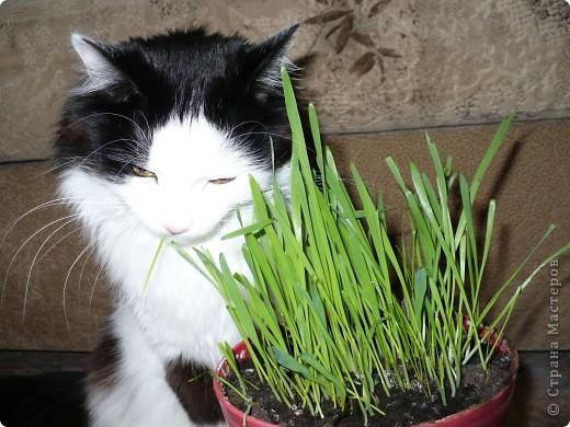 Поздравляем всех кошек и их хозяев, и призываем отметить этот праздник. фото 10
