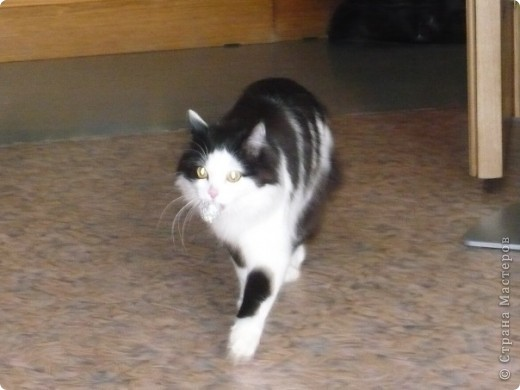 Поздравляем всех кошек и их хозяев, и призываем отметить этот праздник. фото 12