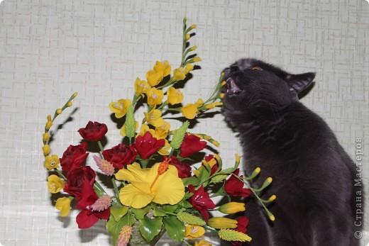 Моя кошка-Нюшка))))любит грызть цветочки