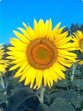 """Очень люблю фотографировать солнышко-свет дающий радость!!! Я так и называю сою подборку- Моя галерея солнца. Однажды мы с подругой сидели и ждали закат солнца на море, ужасно замерзли, был не очень теплый сентябрьский вечер, но зато как мы были вознаграждены. Когда я увидела это фото, я прыгала и кричала: """"Лариса, смотри это же солнечная девочка!"""" фото 15"""