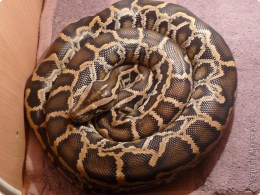Змеиная фотосессия фото 2