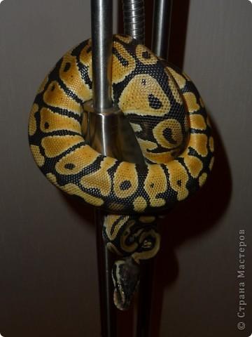 Змеиная фотосессия фото 1