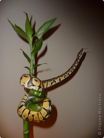Змеиная фотосессия фото 3