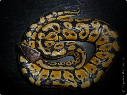 Змеиная фотосессия фото 4