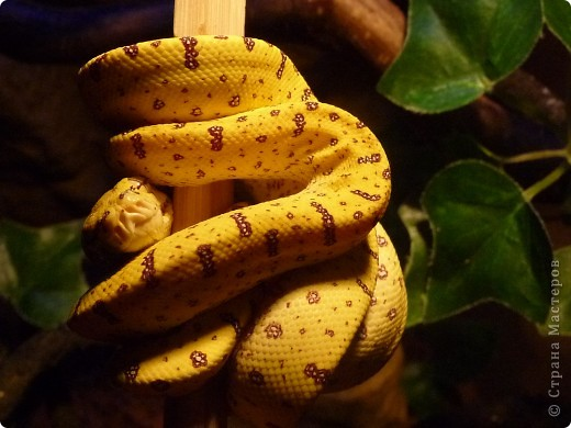 Змеиная фотосессия фото 6