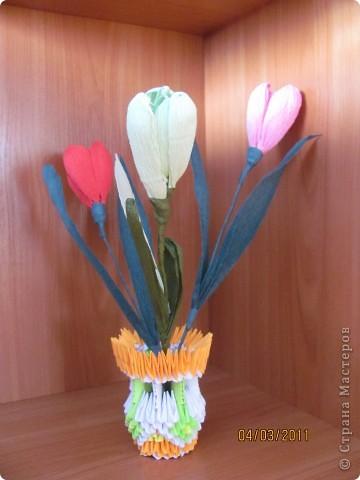 Мои тюльпаны!!!!