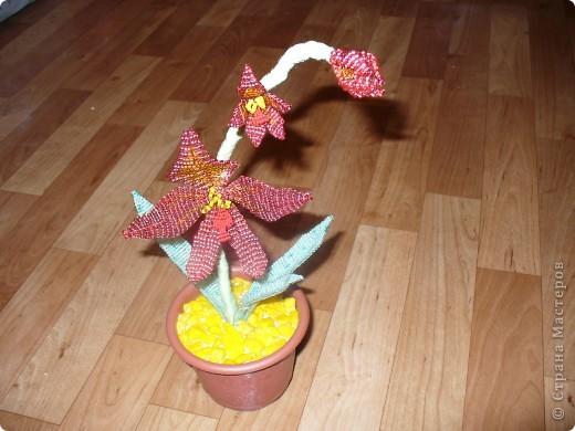 Небольшая орхидея. Мой первый опыт в плетении(больших) цветов. фото 2