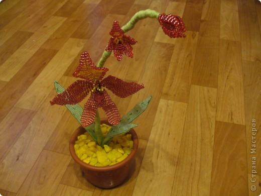 Небольшая орхидея. Мой первый опыт в плетении(больших) цветов. фото 1