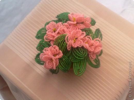 розовая фиалка фото 2