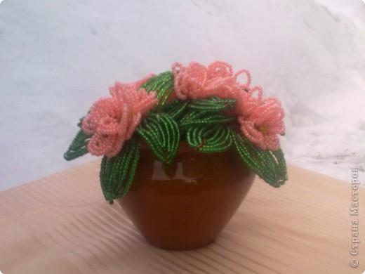розовая фиалка фото 1