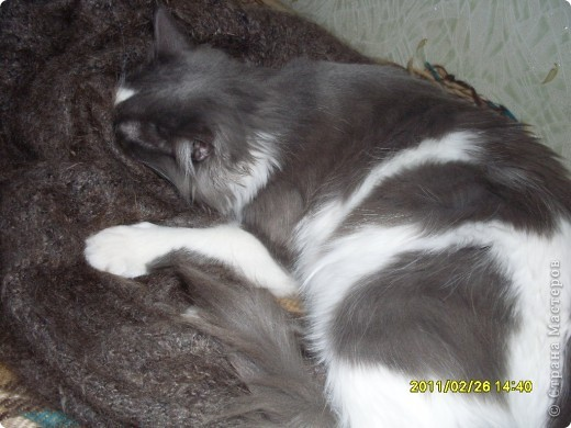 Спит фото 5