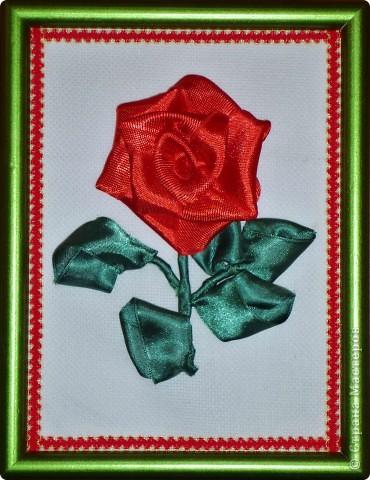 Роза-малышка