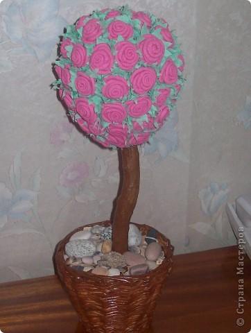 Наконец я тоже вырастила розовое дерево. Спасибо Олисандре за ее МК. фото 1