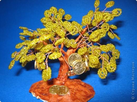 моё денежное дерево фото 1