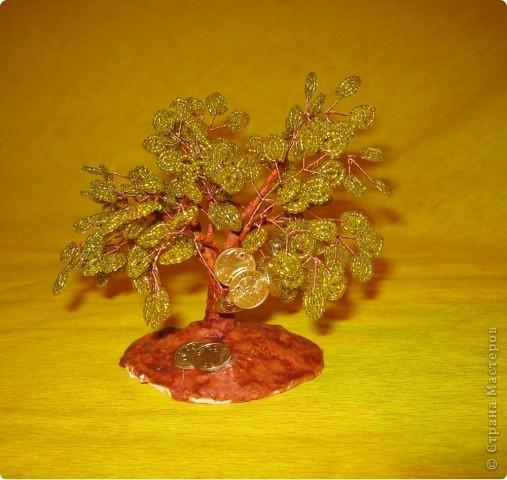 моё денежное дерево фото 2