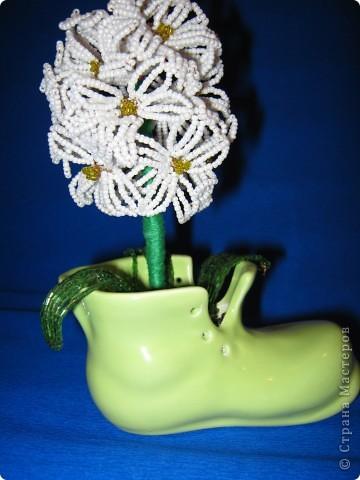 вот такой цветочек у нас вырос фото 2
