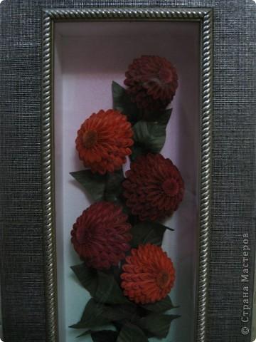 Вот и у меня появились эти цветочки.  фото 2