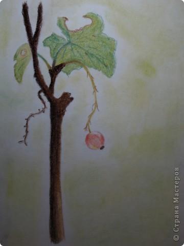 первые рисунки карандашом фото 5