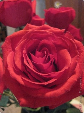 МАМОЧКЕ ПОДАРОК (Ольга Чусовитина)  Из цветной бумаги  Вырежу кусочек. Из него я сделаю Маленький цветочек. Мамочке подарок Приготовлю я. Самая красивая  Мама у меня!   фото 3