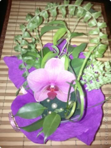 Живая орхидея