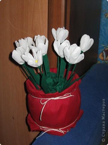 Крокусы в горшочке. фото 1