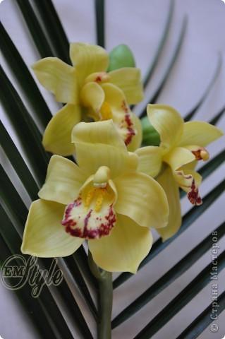 Ох, девочки... Хоть к орхидеям я равнодушна -не смогла устоять против появившейся в доме на 8 марта живой, огромной ветки орхидеи Цимбидиум(я даже сорт узнала))) Села лепить...без молдов, каттеров и остальных страшных названий - что называется наобум) Даже не знала что получится - поэтому сделала минимум цветочков... Ну а что получилось - решать Вам... фото 2