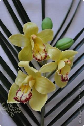Ох, девочки... Хоть к орхидеям я равнодушна -не смогла устоять против появившейся в доме на 8 марта живой, огромной ветки орхидеи Цимбидиум(я даже сорт узнала))) Села лепить...без молдов, каттеров и остальных страшных названий - что называется наобум) Даже не знала что получится - поэтому сделала минимум цветочков... Ну а что получилось - решать Вам... фото 3