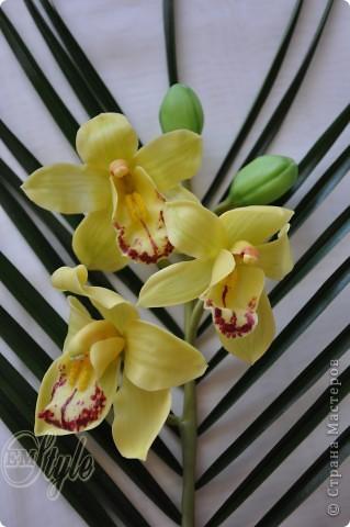 Ох, девочки... Хоть к орхидеям я равнодушна -не смогла устоять против появившейся в доме на 8 марта живой, огромной ветки орхидеи Цимбидиум(я даже сорт узнала))) Села лепить...без молдов, каттеров и остальных страшных названий - что называется наобум) Даже не знала что получится - поэтому сделала минимум цветочков... Ну а что получилось - решать Вам... фото 1
