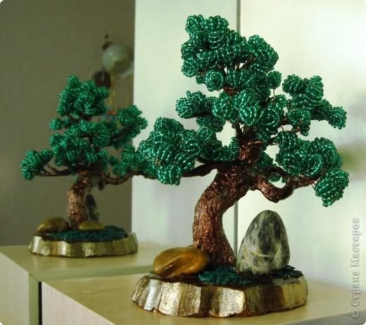Мои новые деревья фото 10