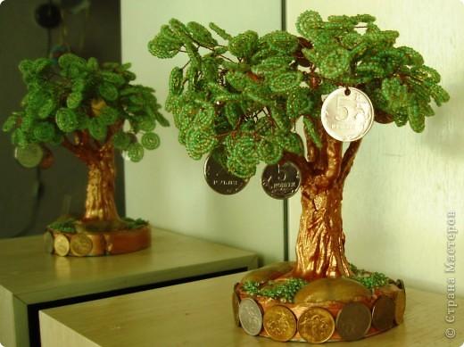 Фотография 1. Денежные деревья.
