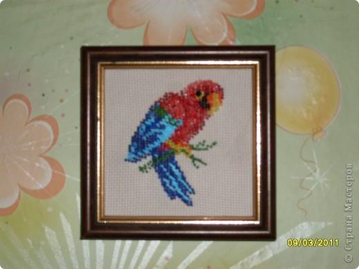 попугай из бисера