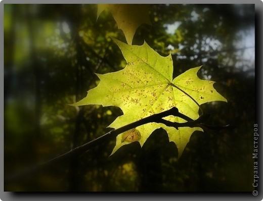 Осень золотая.ю чудная пора...